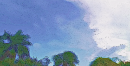 Cartoon Tropical Sky
